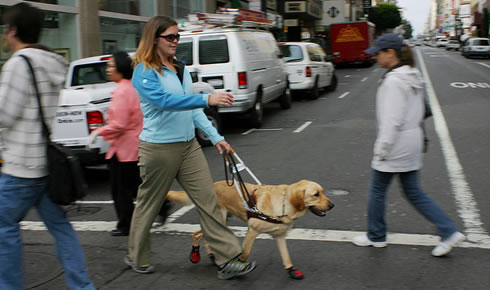 Working with a guide dog: q&a with claire palmer uncovered.
