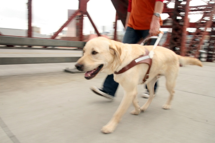 Guide Dogs for the Blind - Guide Dog Training