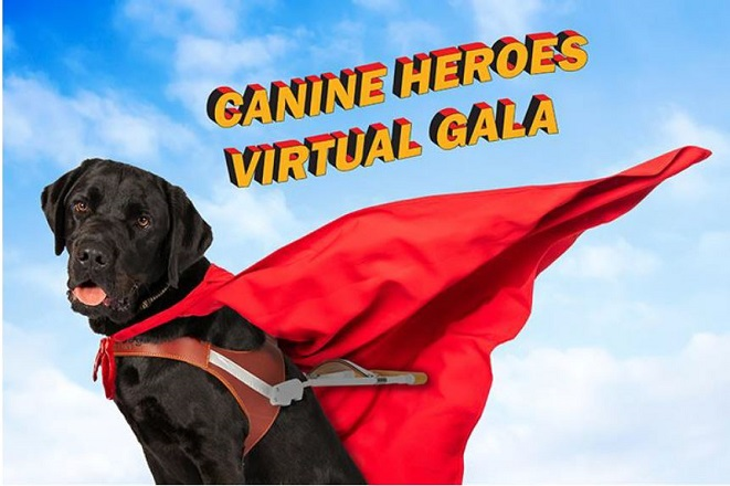 A black Lab sits in his harness wearing a red cape. The words Canine Heroes Virtual Gala appear in the blue sky above him.