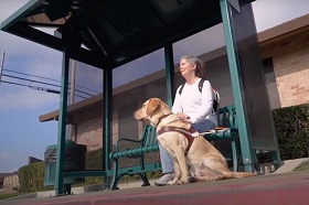 GDB client and archer Janice Walth sits at a bus stop with her yellow lab guide dog