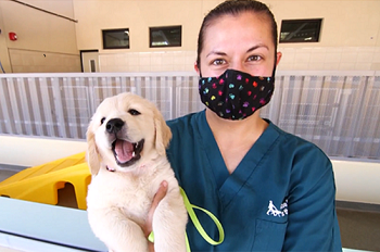 A GDB employee holding a yellow Lab puppy