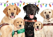 Three guide dogs and two pups in training smile at the camera with festive lights behind them.