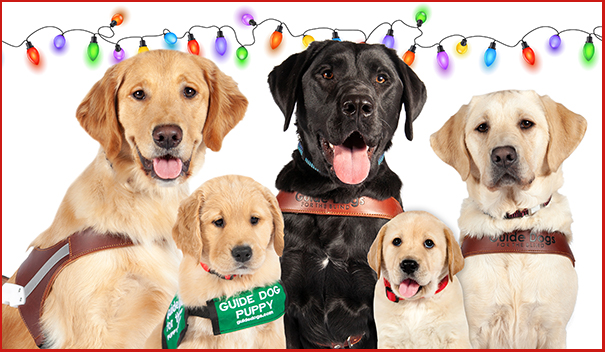 Three guide dogs and two pups in training smile at the camera with festive lights behind them